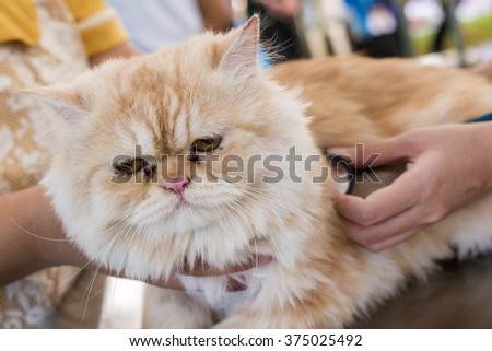 veterinary checking the heart rate of cat with stethoscope. (animal hospital)