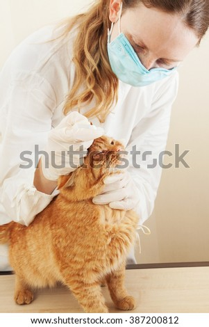 Veterinary clinic.cat during examination by a veterinarian. - stock photo