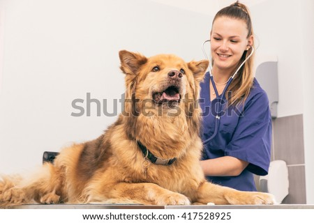 Veterinary doctor checking dog heart with medical tool