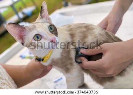 veterinary doctor checkup cat with stethoscope. - stock photo