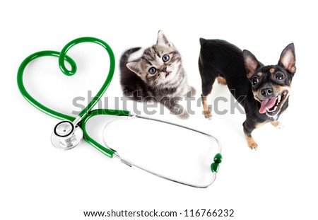 Veterinary for cats, dogs and other pets concept - stock photo