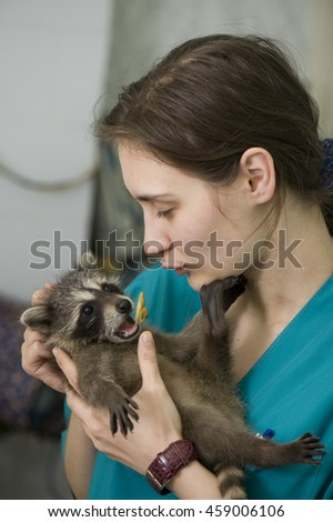 Veterinary nurse with patient (adorable raccoon) - stock photo