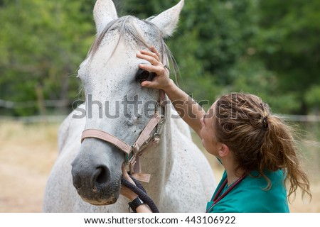 Veterinary performing a visual inspection of a horse on the farm - stock photo