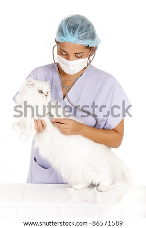 veterinary woman examining angora white cat - stock photo