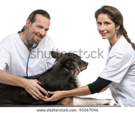 Vets examining a Border collie with a stethoscope in front of white background - stock photo