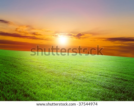 Vhery mach green grass under red sky