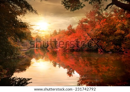 Vibrant colors of the autumn forest at sunset - stock photo