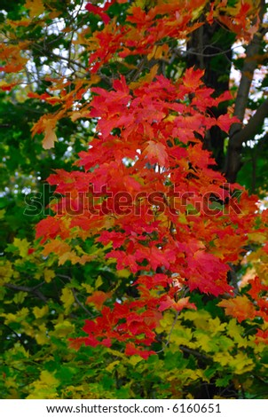Vibrant fall foliage on a bright overcast day - stock photo