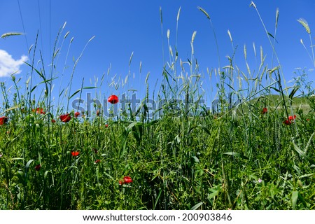 Vibrant field flowers against blue sky - stock photo