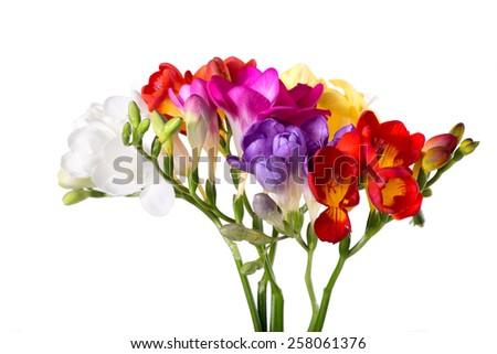 vibrant freesias bouquet isolated on white background - stock photo