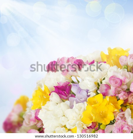 vibrant freesias bouquet on blue sky background - stock photo