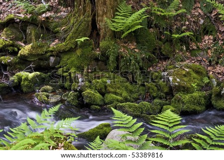 Vibrant green ferns, moss, a decaying tree is part of the landscape in Tillman's Ravine, Stokes State Forest in Northwestern, New Jersey. - stock photo