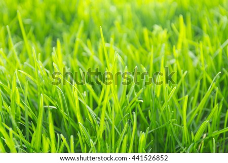 Vibrant green grass close-up with DOF focus.