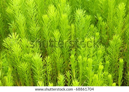 Vibrant green plants for nature or environment background - stock photo