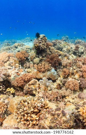 Vibrant, healthy tropical coral reef - stock photo