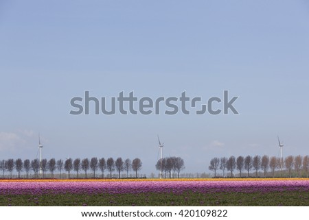 vibrant pink and orange tulips on dutch tulip flower landscape in holland with row of trees and wind turbines - stock photo