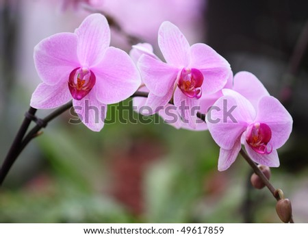 Vibrant pink orchids form a rainbow shaped arch