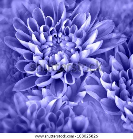 vibrant purple flower-photo illustration