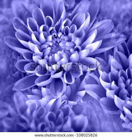 vibrant purple flower-photo illustration - stock photo