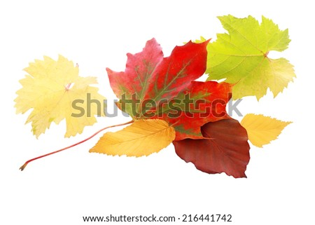 Vibrant red autumn leaf amongst a selection of leaves in yellow and green showing the colorful palette of the fall season, isolated on white - stock photo