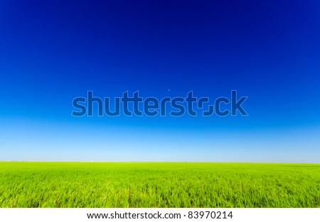 Vibrant shot of a green meadow under a blue sky - stock photo
