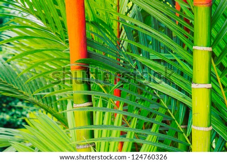 Vibrant Tropical Plants In Hawaii, Abstract Background - stock photo
