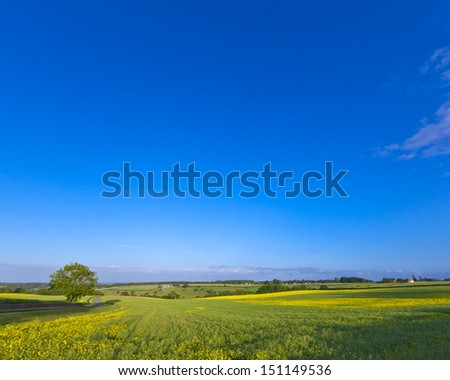 Vibrant yellow crop of canola grown as a healthy cooking oil or conversion to biodiesel as an alternative to fossil fuels. - stock photo