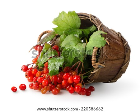Viburnum in a basket isolated on white - stock photo