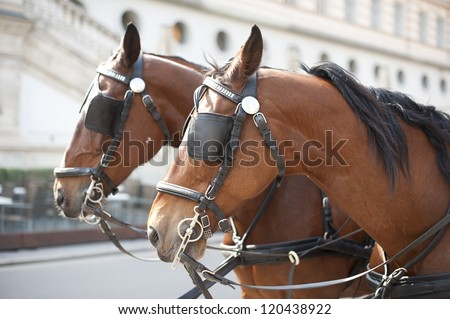 Image result for horse with blinders photo
