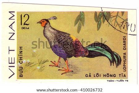 VIETNAM - CIRCA 1978 : A stamp printed by Vietnam shows bird an Lophura Diardi, from the series Ornamental bird , circa 1978. - stock photo