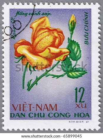 VIETNAM - CIRCA 1967: A stamp printed in Vietnam shows orange rose, series devoted to roses, circa 1967