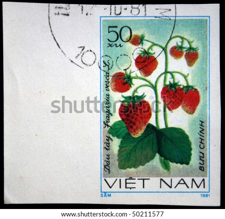 VIETNAM - CIRCA 1981: A stamp printed in Vietnam shows Woodland strawberry - Fragaria vesca, circa 1981 - stock photo