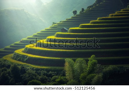 Vietnam Rice fields on terraced in rainy season at Mu cang chai, Vietnam. Rice fields prepare for transplant at Northwest Vietnam