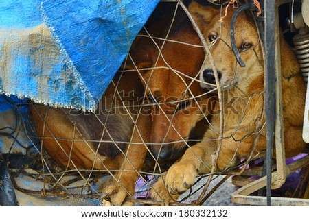 Vietnamese dogs for sale for food. - stock photo