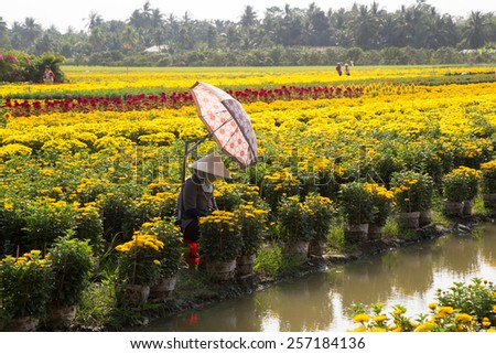 VietNamese woman with conical hat is harvesting flower, in TienGiang, VietNam - stock photo