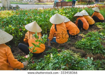 Vietnamese women in conical hat harvest flower in park preparing for national holiday. Common familiar image in Vietnam. Focus on the woman