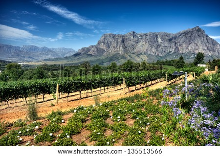 View across vineyards of the Stellenbosch district with the Simonsberg mountain in the background , Western Cape Province, South Africa. - stock photo