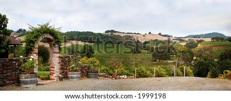View at at Sonoma valley with rows of grapes from California winery - stock photo