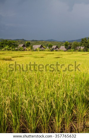 View at rice fields in Pai in northern Thailand