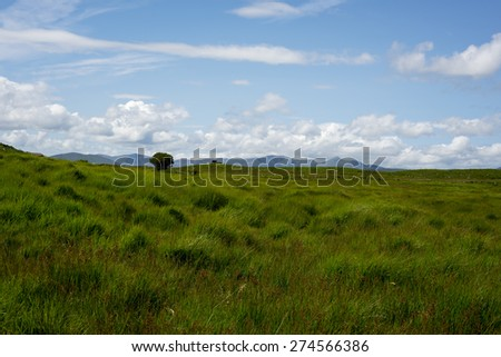 view from a beautiful hiking route the kerry way in ireland of cattle and green landscape - stock photo