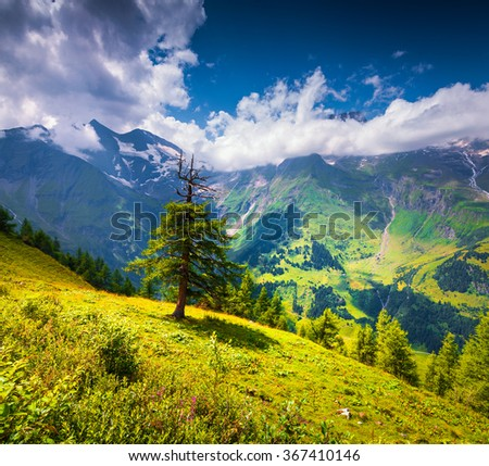 View from Grossglockner High Alpine Road of Grossglockner mountain range in the morning mist. Old fir tree on the green lawn. Austria, Alps, Europe. - stock photo