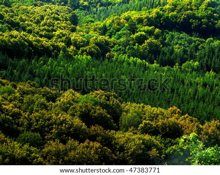 view from the height on the large mixed forest