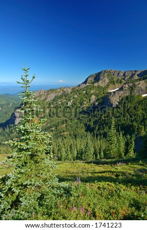 view from the Mt. Townsend hiking trail in the Olympic Mountains of Washington State, Mt. Rainier can be seen in the distance - stock photo