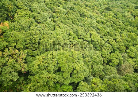 View from the top of the impenetrable forest. Sunny day. - stock photo