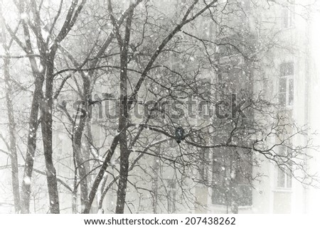 View from the window during snow storm at the pigeons sitting on the tree - stock photo