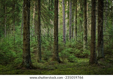 view inside of the forest on the trees - stock photo