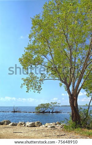 View of a Buttonwood  trees over Biscayne National Park - stock photo