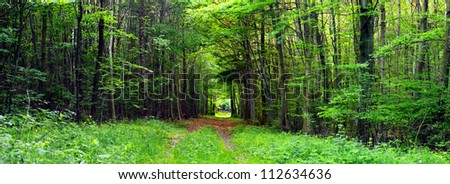 View of a dirt forest road in the mixed forest (beech,oak,ash), warm evening light, spring, stitched, by Beckingen - Saarland/Germany - stock photo