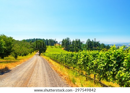 View of a dirt road passing through a vineyard in rural Oregon - stock photo