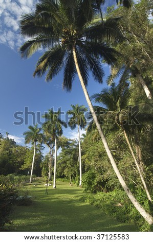 view of a jungle in Cuba Island - stock photo